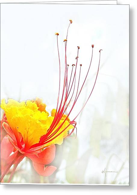 Mexican Bird Of Paradise Greeting Card by Kume Bryant