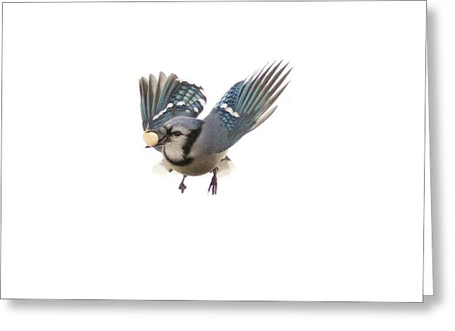 Mid Air Greeting Card