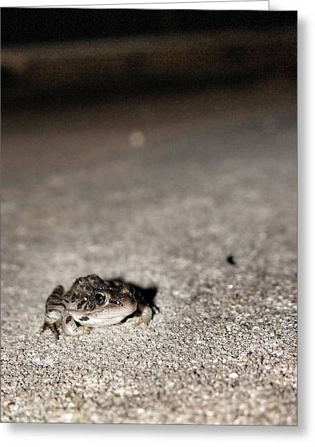 Midnight Frog Greeting Card