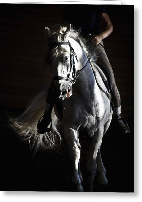 Midnight Ride Greeting Card by Wes and Dotty Weber