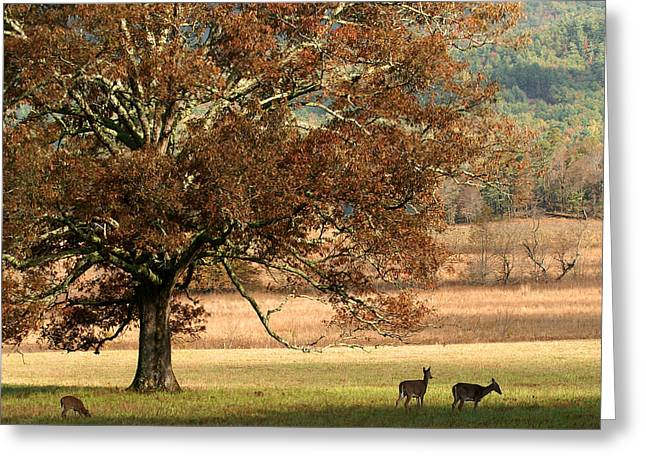 Mighty Oak Greeting Card by TnBackroadsPhotos