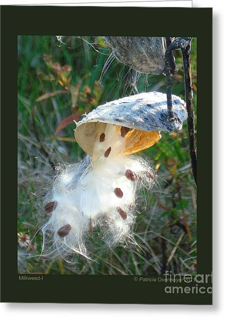 Milkweed-i Greeting Card by Patricia Overmoyer