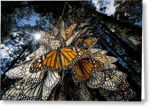 Millions Of Monarch Butterflies Travel Greeting Card