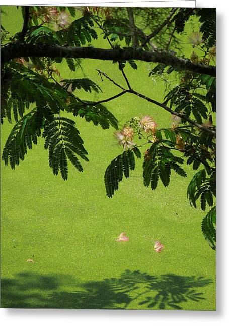 Mimosa Over Swamp Greeting Card by Peg Toliver