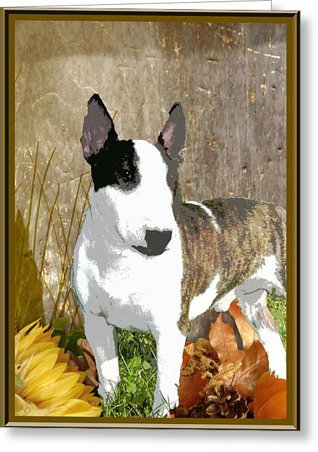 Minature Bull Terrier Greeting Card by One Rude Dawg Orcutt