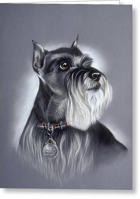 Miniature Schnauzer Greeting Card by Patricia Ivy