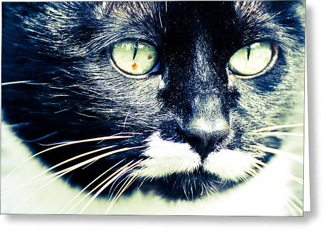 Greeting Card featuring the photograph Minnie by Ronda Broatch