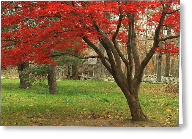 Minuteman National Historic Park Late Foliage Greeting Card by John Burk