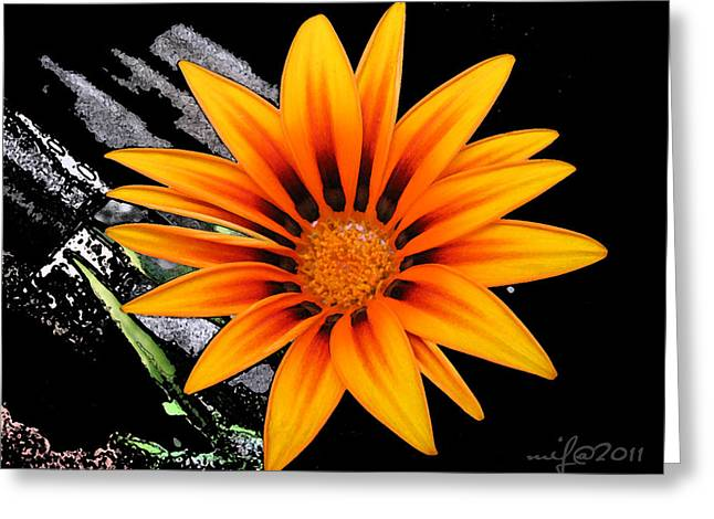Miracle Of A Flower Greeting Card by Maciek Froncisz