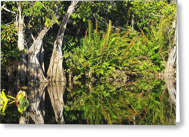 Greeting Card featuring the photograph Mirror Pond by Anne Mott