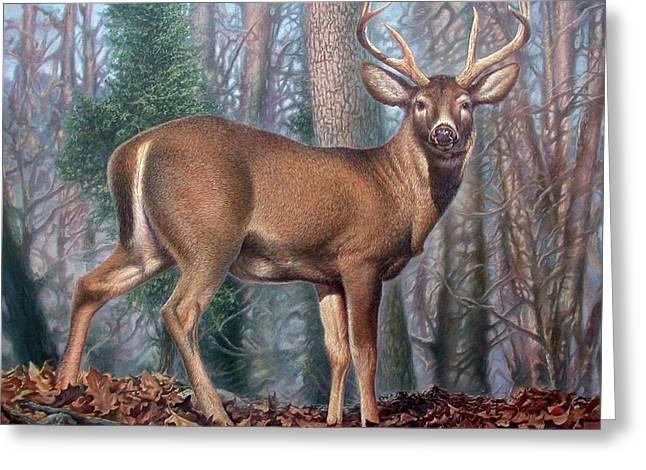 Missouri Whitetail Deer Greeting Card