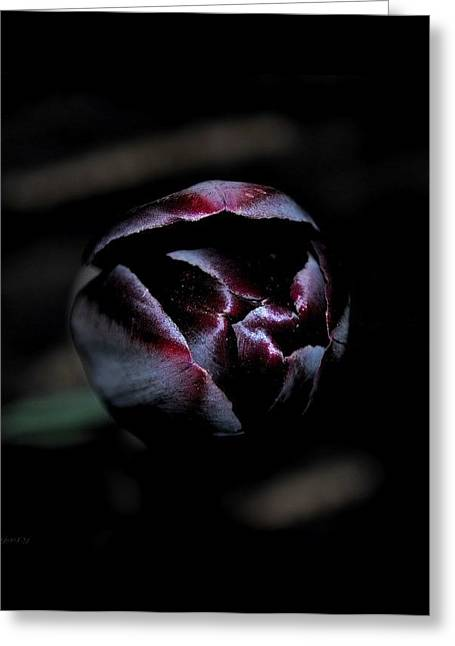 Greeting Card featuring the photograph Misterious by Marija Djedovic
