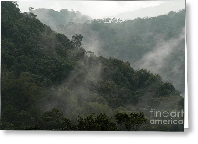 Greeting Card featuring the photograph Misty Cloud Forest Matagalpa Nicaragua by John  Mitchell