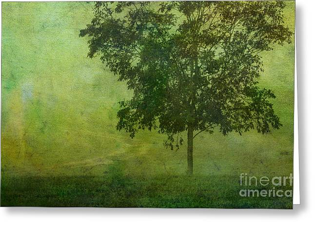 Misty Country Lane Greeting Card by Judi Bagwell