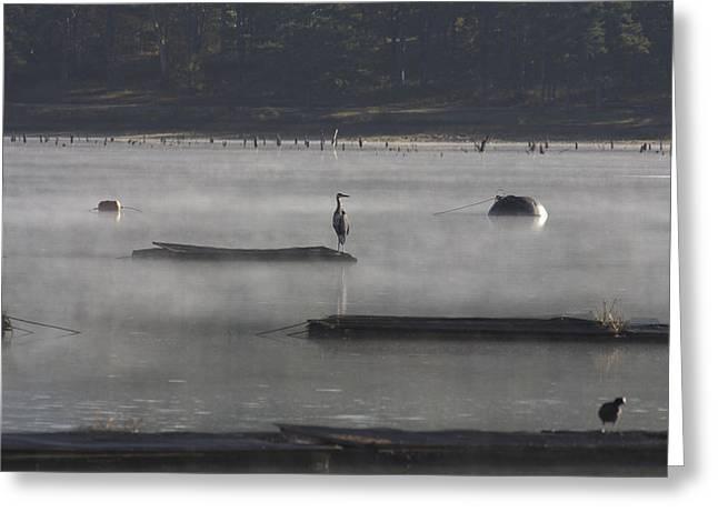 Misty Morning At Lake Wilhelmina Greeting Card by Douglas Barnard