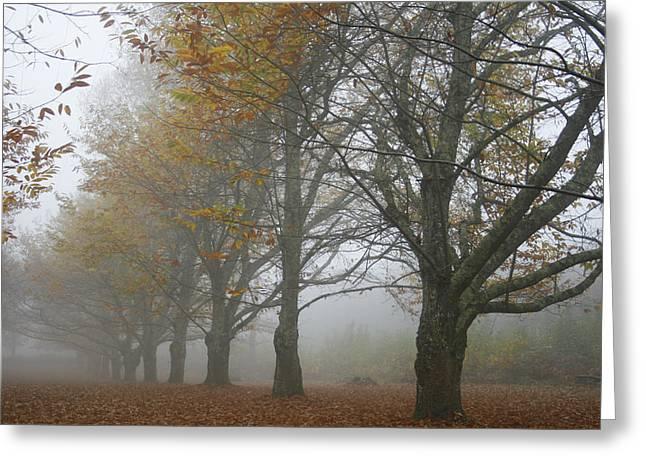 Misty November Greeting Card by Georgia Fowler