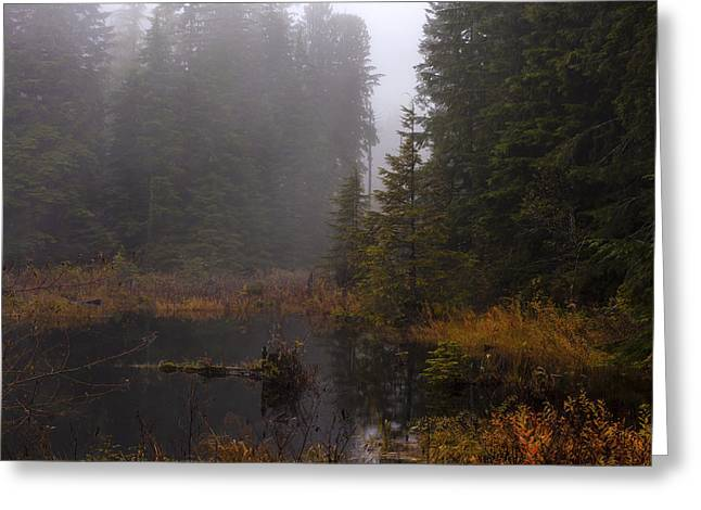 Misty Solitude Greeting Card by Mike Reid