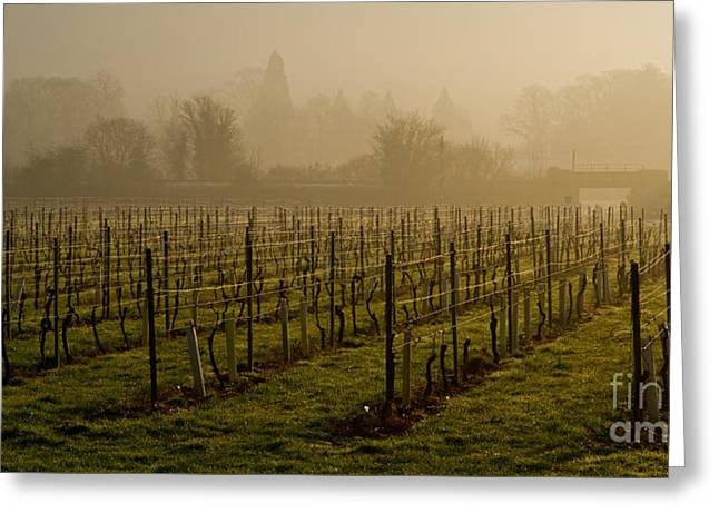 Misty Vines Greeting Card by Urban Shooters