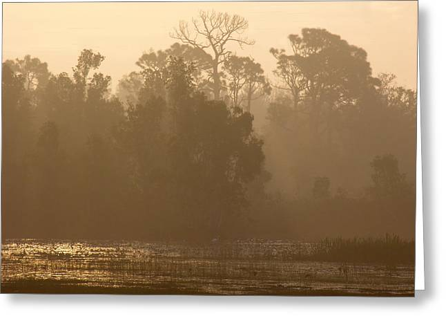 Misty Wetlands Greeting Card