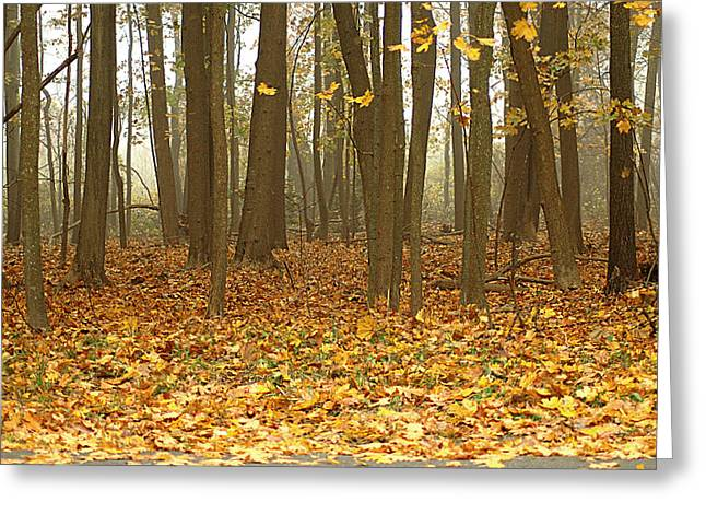 Misty Wood Greeting Card by Cathy Kovarik