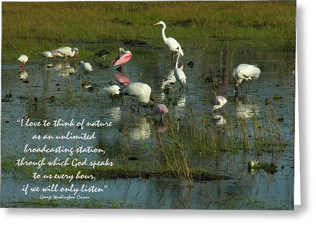 Mixed Flock In Oasis Greeting Card by Grace Dillon