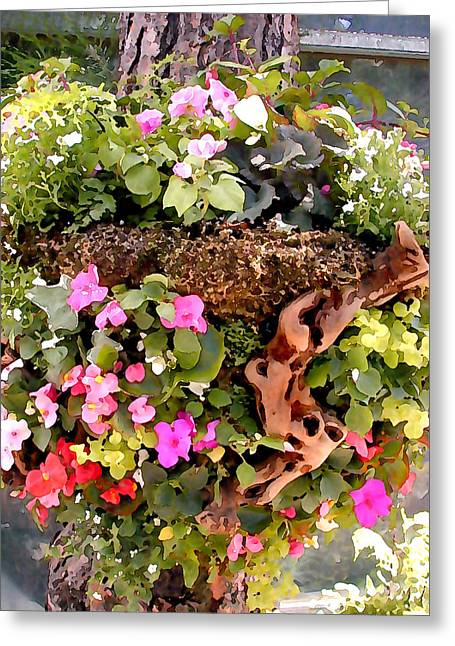 Mixed Impatiens In Driftwood Hanging Basket Greeting Card