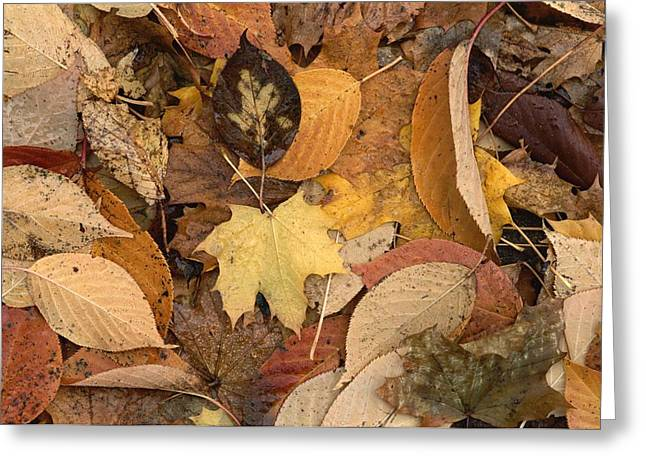 Mixture Of Warm Colored Fall Leaves Greeting Card