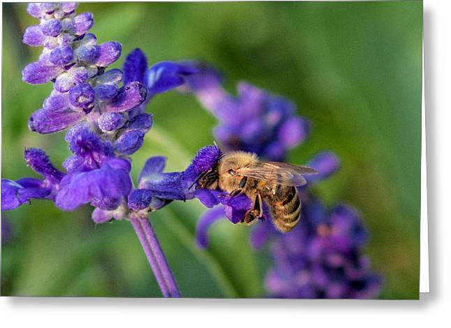 Greeting Card featuring the photograph Mmmm Honey by Tom Gort