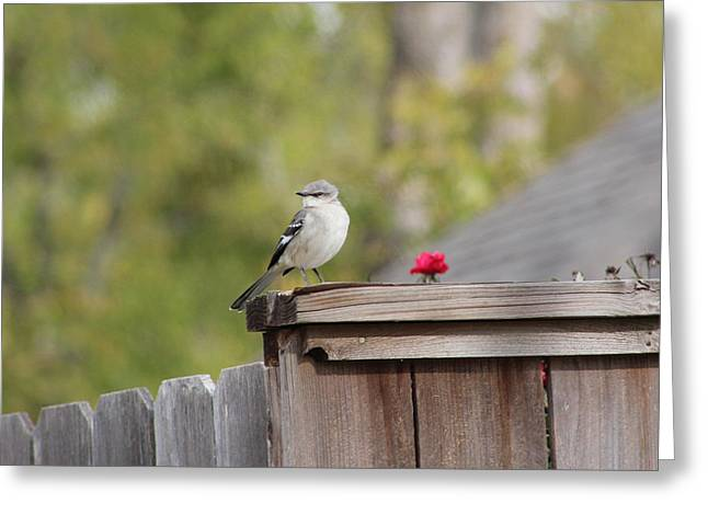 Mockinbird And Red Rose Greeting Card by Alain roger  Fotso dada