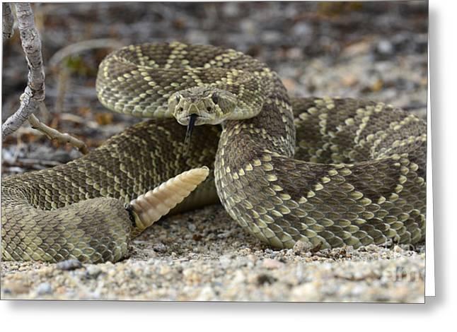 Mojave Green Rattlesnake  Greeting Card by Bob Christopher