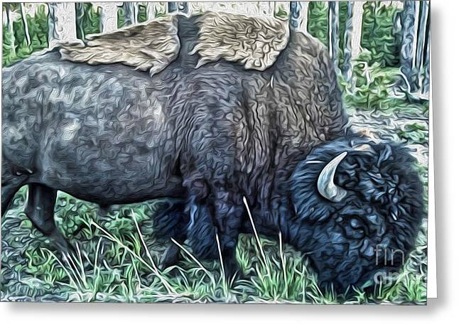 Molting Bison In Yellowstone Greeting Card
