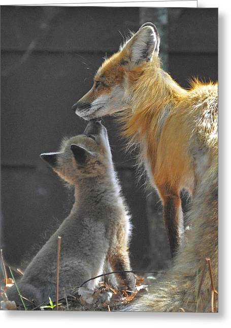 Momma Love Greeting Card by RJ Martens