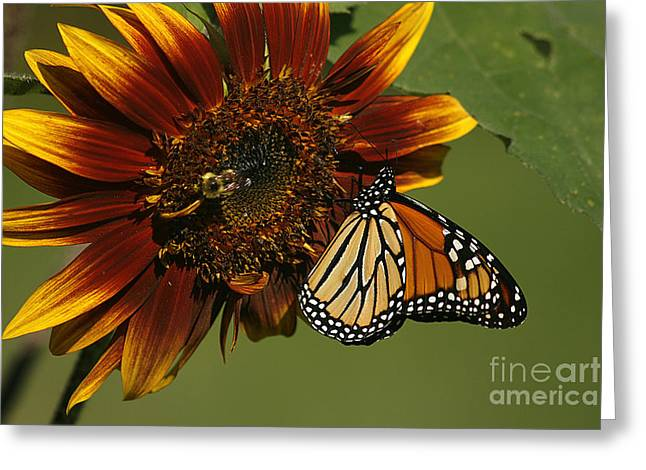 Monarch And The Bee Greeting Card