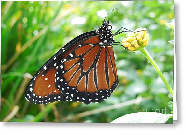 Monarch Butterfly Greeting Card by Chad and Stacey Hall