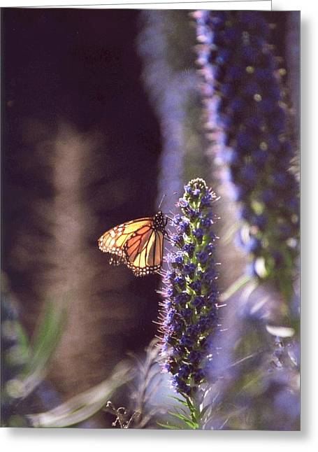 Greeting Card featuring the photograph Monarch Butterfly by Cynthia Marcopulos