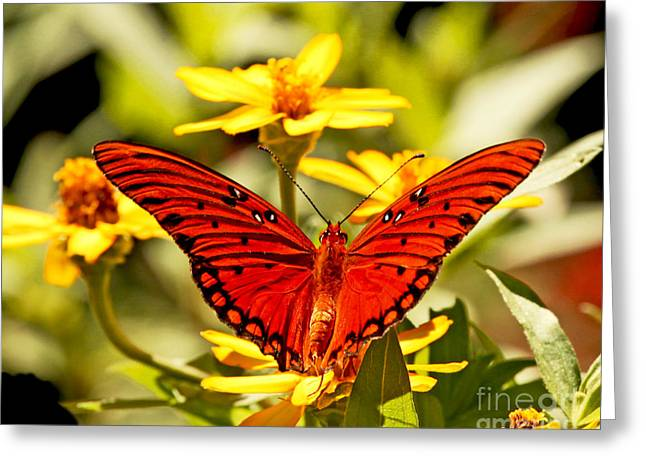 Greeting Card featuring the photograph Monarch Butterfly  by Luana K Perez