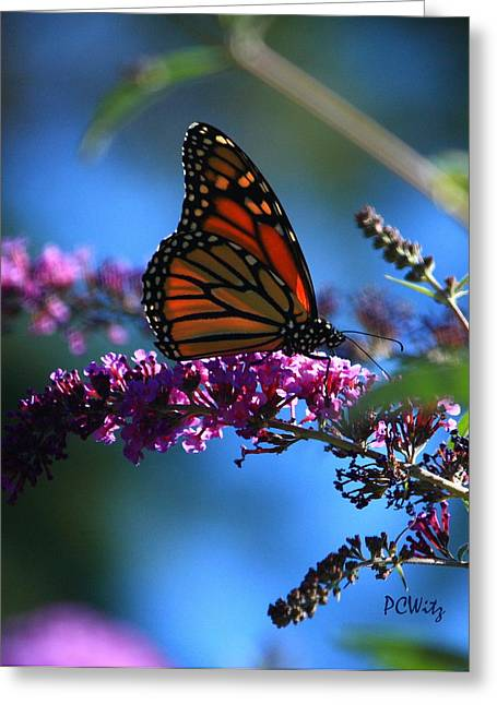 Greeting Card featuring the photograph Monarch Butterfly by Patrick Witz