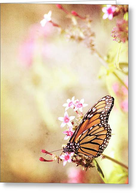 Monarch Canvas Greeting Card by Joel Olives
