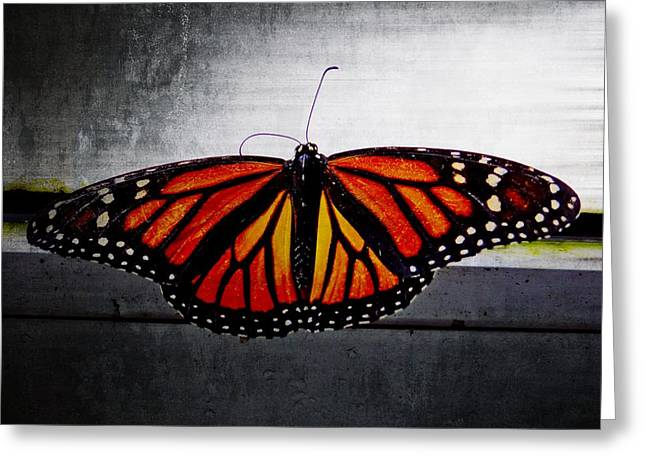Monarch Greeting Card by Julia Wilcox