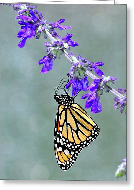 Monarch On Purple Greeting Card