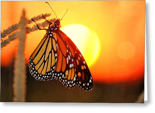 Monarch Sunset Greeting Card