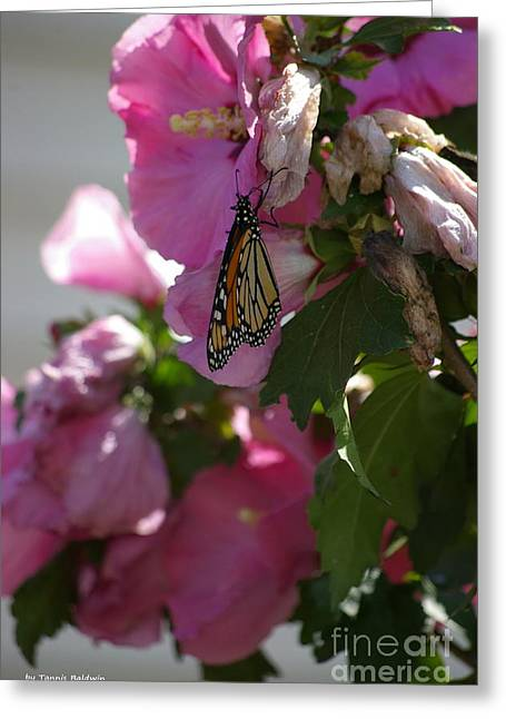 Greeting Card featuring the photograph Monarch by Tannis  Baldwin