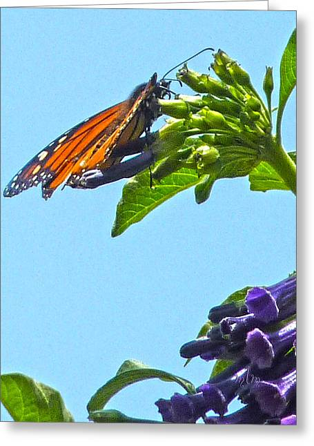 Monarch With Purple Flower Greeting Card