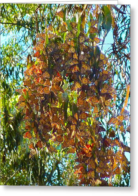 Monarchs At Rest Greeting Card