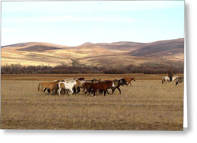 Mongolian Horses Greeting Card by Diane Height