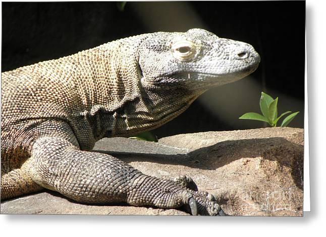 Monitor Dragon Lizard Photograph By Kim Galluzzo Wozniak
