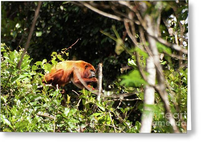 Monkey In The Trees Greeting Card