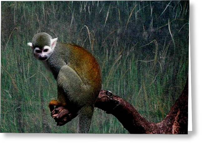 Greeting Card featuring the photograph Monkey by Maria Urso