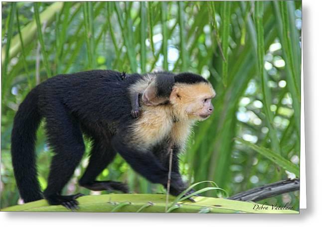 Monkey On My Back Greeting Card by Debra     Vatalaro