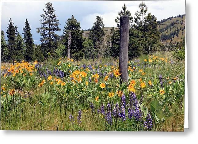 Montana Wildflowers Greeting Card by Athena Mckinzie